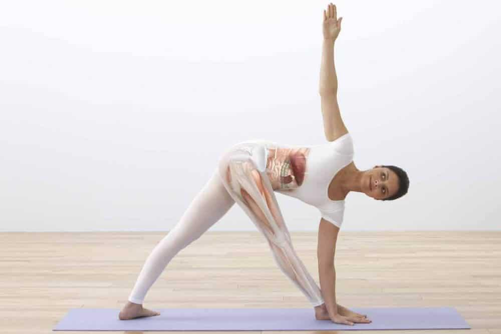 Live Onlinekurs: Praktische Yoga Anatomie 6 - Zwei Asanas verstehen