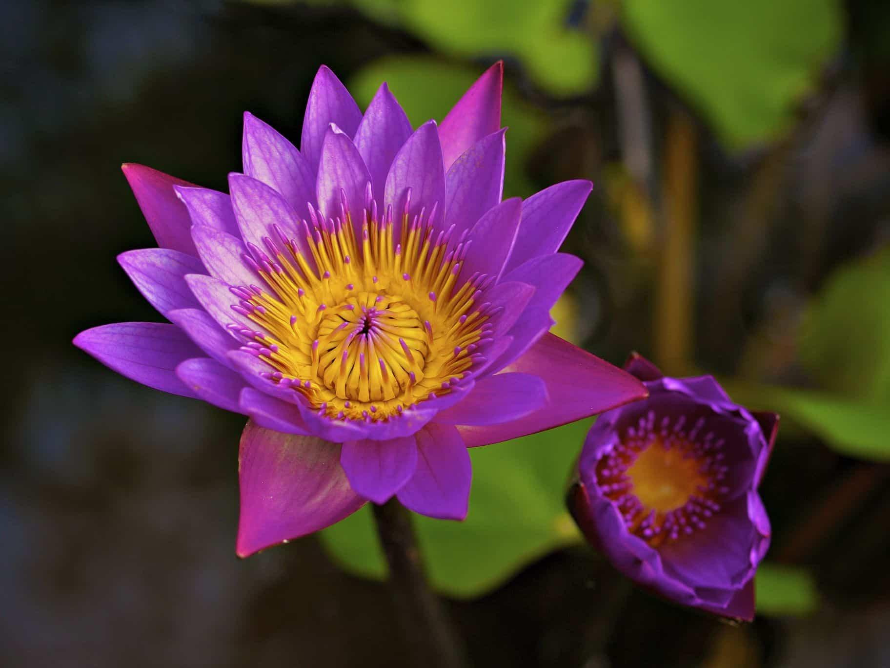 Live Onlinekurs: Lehren über die göttliche Liebe. Aus den Narada Bhakti Yoga Sutren